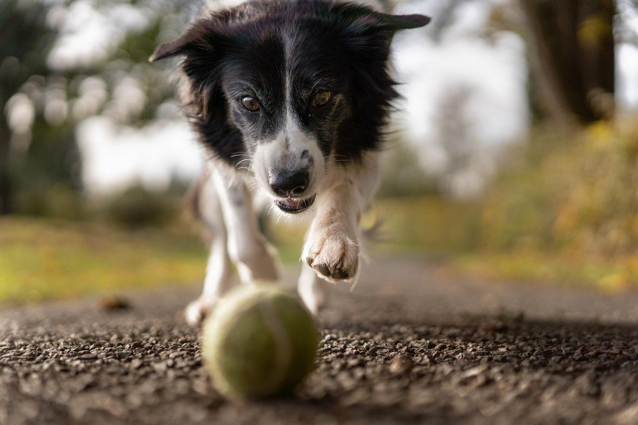 Passear com cachorros: dicas e benefícios de ter um animal de estimação (Foto de Aloïs Moubax no Pexels)