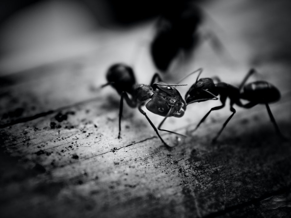 4 melhores maneiras de manter os insetos longe de sua casa (Foto de Syed Rajeeb no Pexels)